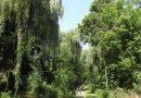 Pădurile Parc Șipote și Zamca au intrat în proprietatea municipiului Suceava. După alegerile parlamentare, va fi o consultare publică privind investițiile ce se vor face în cele două zone