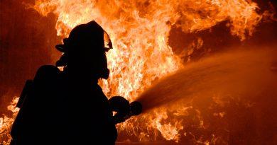 70 de animale, vite și oi,  moarte într-un incendiu izbucnit în această după amiază la Bosanci, la un adăpost de animale