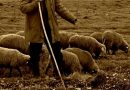 """Trei bărbați din Basarabi – Preutești s-au pornit să bată  pe un cioban pe pășunea  """"La cei doi fagi"""", dar nu au luat cu ei declarația pe proprie răspundere privind scopul deplasării"""