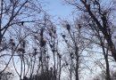 Ciorile au pus stăpânire pe zone întregi din oraşul Suceava. Comunicat de presă Uniunea pentru Bucovina, semnat de președintele interimar, Sandrinio Neagu