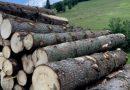 Dan Acibotăriță, președintele PV Suceava: după instalarea stării de urgență, pădurea din județul Suceava este mai batjocorită ca niciodată