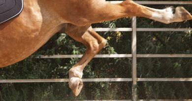 Două fetițe din Voitinel au ajuns la spital după ce au căzut de pe cal. Tatăl le-a făcut hatârul, lăsându-le  să se urce pe animalul neastâmpărat, pentru poze