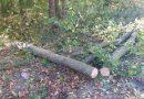 Muncitor la o firmă de exploatare a lemnului, rănit grav după ce a fost lovit în cădere de copacul pe care l-a tăiat cu drujba, la Valea Putnei