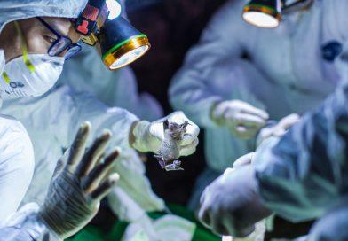 Isteria Coronavirus, varianta Suceava: măștile de protecție au dispărut din farmacii, locația unde vor fi plasați cei suspecți de infectare, veniți din Italia, este secretă