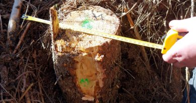 Fapte ilegale în domeniul forestier identificate de către Garda Forestieră Suceava în luna octombrie la ocoalele silvice private Dealu Negru și Bucovina