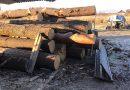 """,,SCUTUL PĂDURII""""  lovește la Horodniceni: amendă de 5000 lei și lemn confiscat de la o femeie care deținea un gater ilegal"""